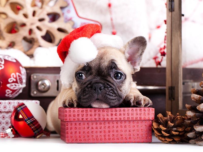 practical-dog-gifts-header