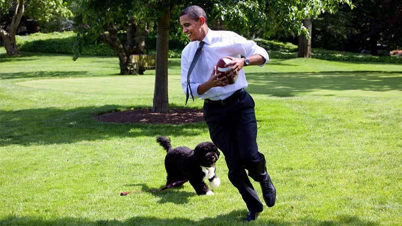 presidential pup header