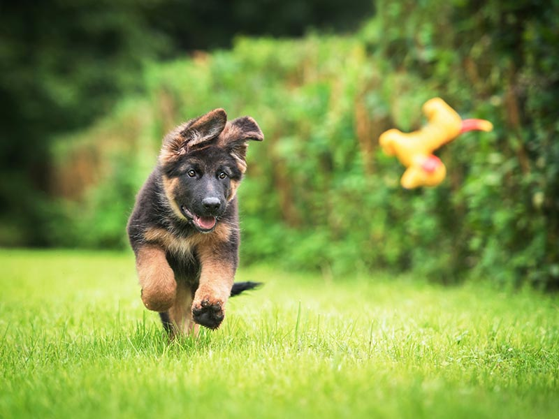 puppy-exercise-header