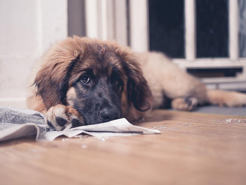puppy-proof-header