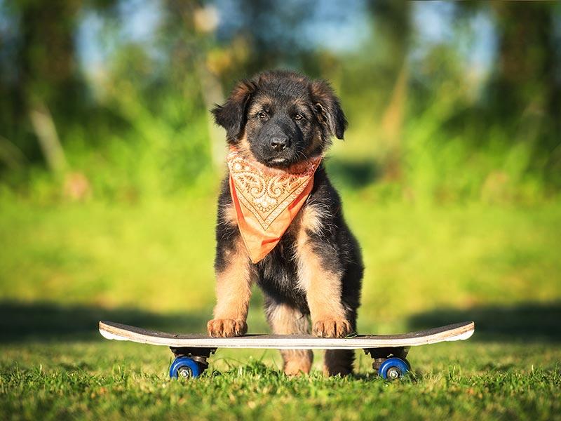 puppy-skateboard-header