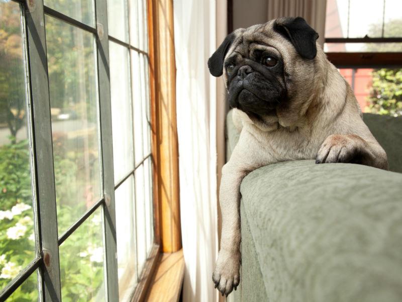 puppy_in_the_window_hero