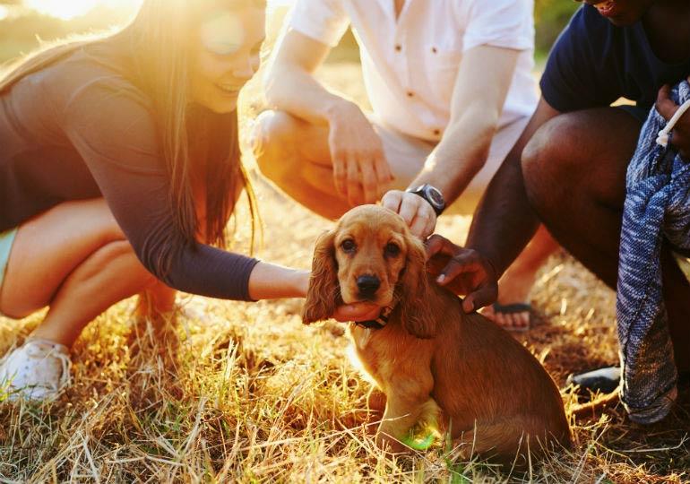 puppy_socialization_hero