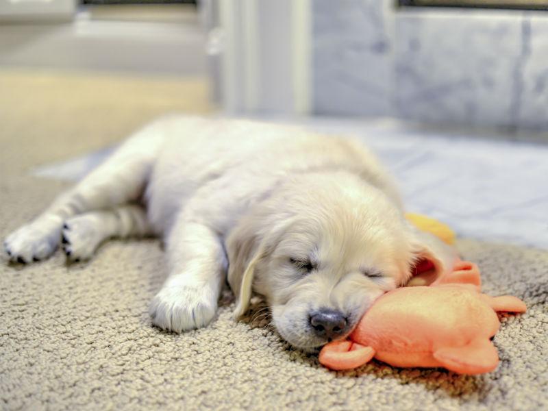 puppy toys header
