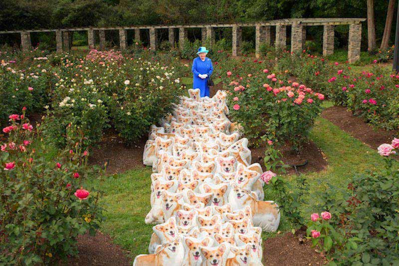 Queen with corgis in field