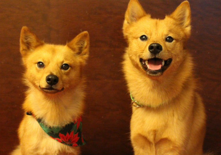 11 Rare Dog Breeds You Never Knew Existed