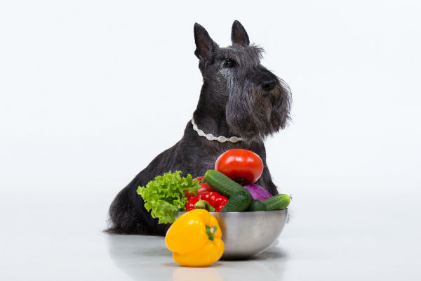 are tomatoes safe for dogs