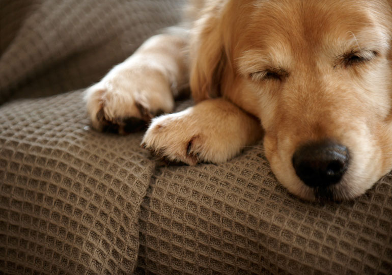 seizures in dogs header
