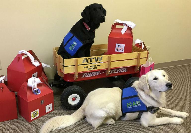 valentines service dogs