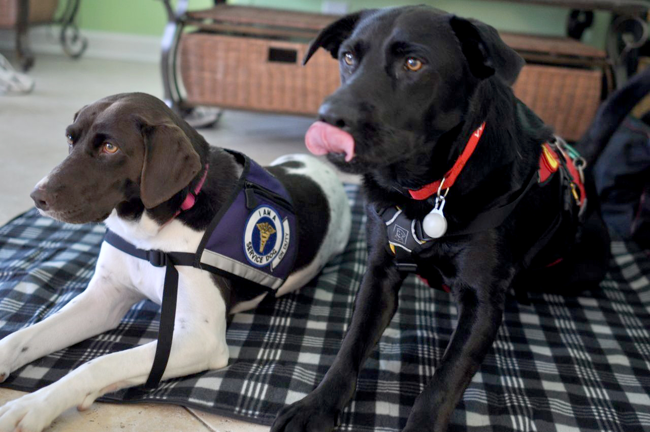 service dog training header