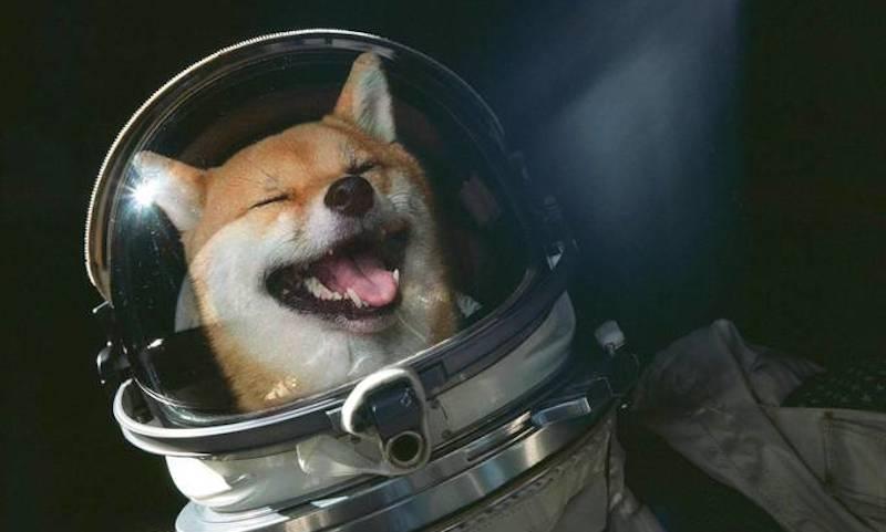 shiba in space header