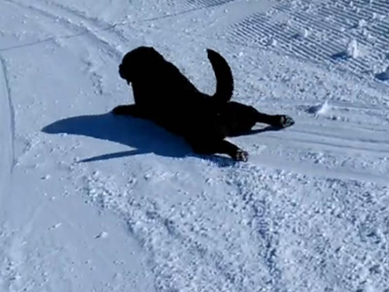 sledding lab header
