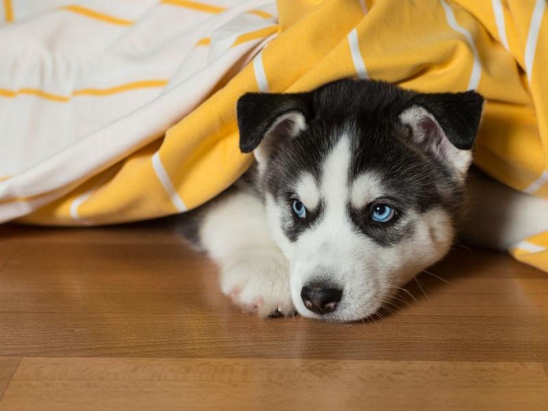sneak dog hero