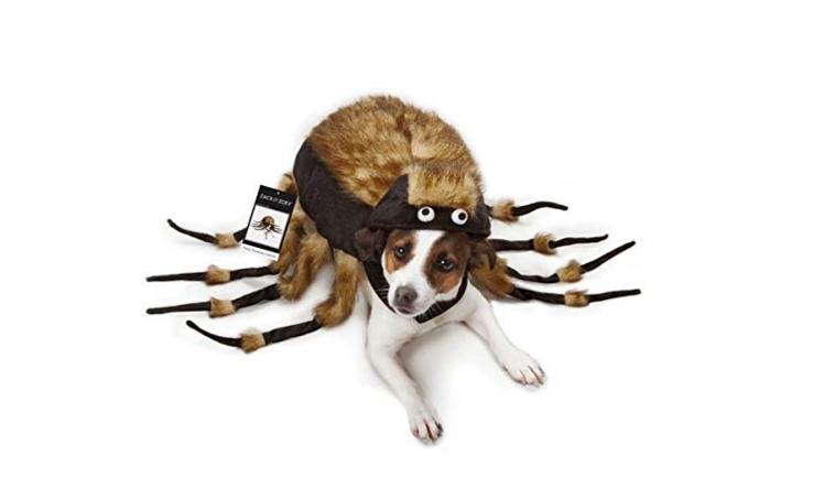 spider dog costume header