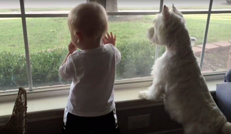 terrier and baby watch duck