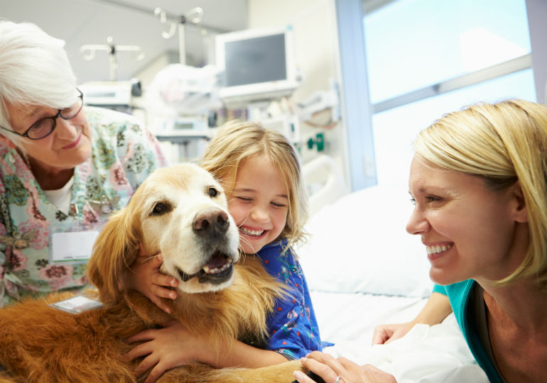 therapy dog header