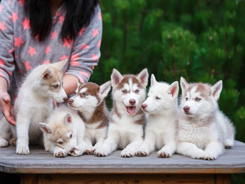 top-dog-names-2017