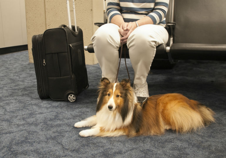 traveling tips hero