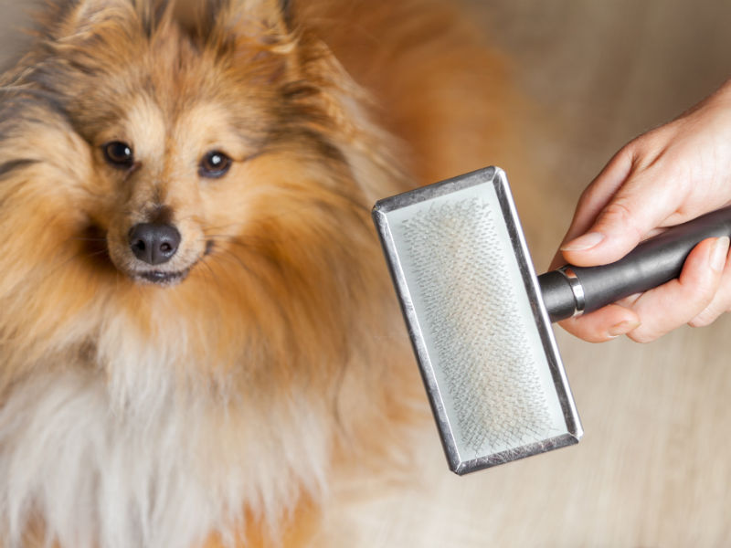 vacuum for pet hair header