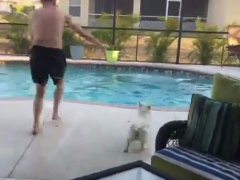 westie_cannonball