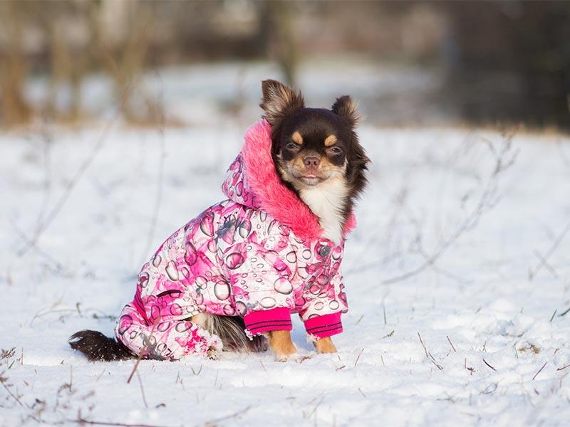 winter-coat-header.jpg