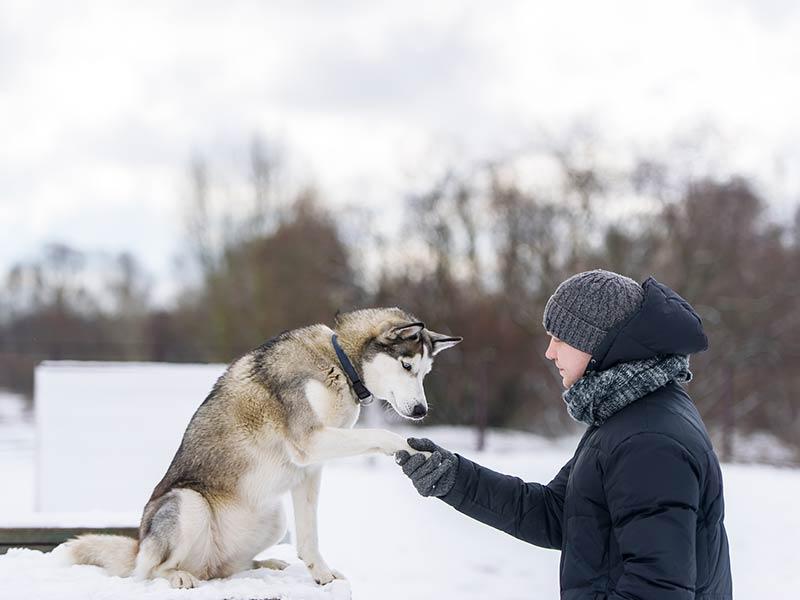 winter-training-hero