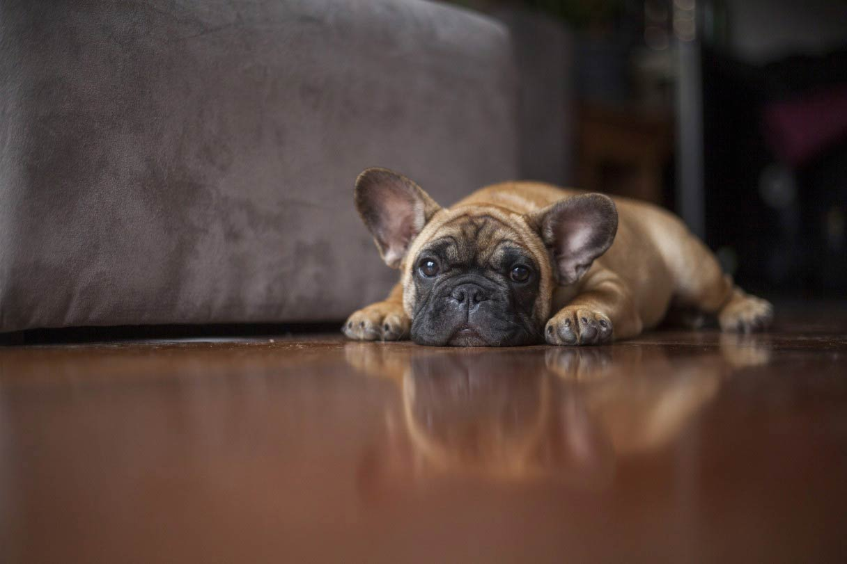 Worms in Dogs – American Kennel Club