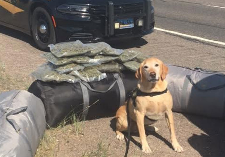 300 Pounds of Drugs Are Off The Highway, Thanks To This Drug Detection Dog