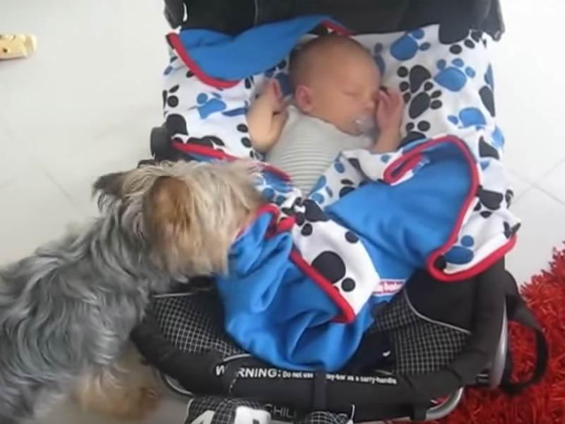 yorkie and baby header