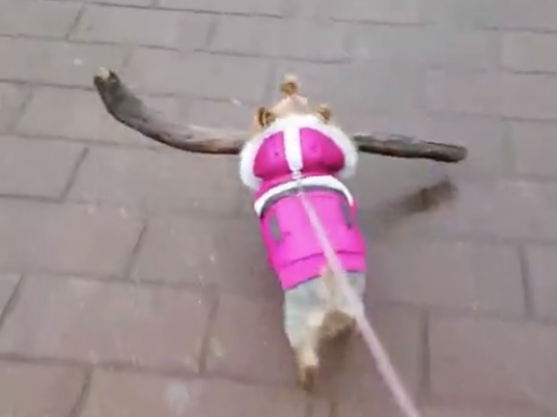 yorkie_stick_hero