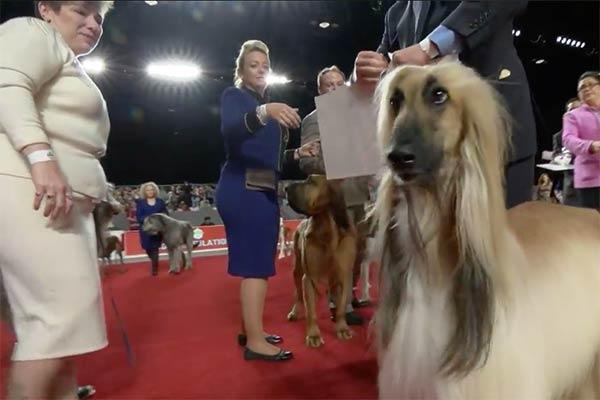 hound winner
