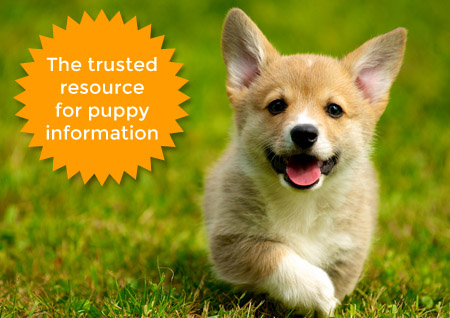 Sign up for AKC pupdate