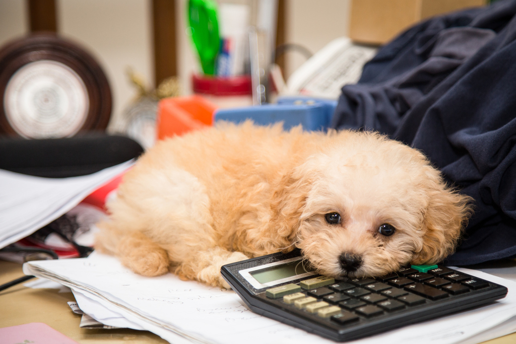 Tax Tips For Dog Breeders – American Kennel Club