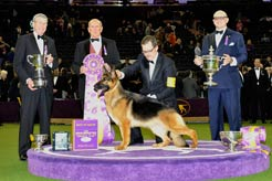 10 Years of Westminster Best in Show Winners