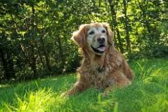 Monitoring Your Senior Dog's Health — When Aging Is More Than Aging
