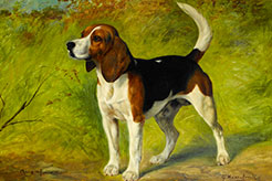 Beagle, Harrier, Foxhound: The Same But Different