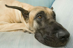 Canine Influenza Virus Notice