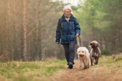 How to Provide Your Senior Dog With Proper Exercise - thumbnail