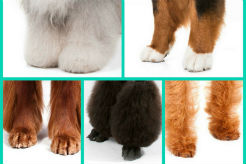 Quiz: Can You Identify the Dog Breed by Its Feet?