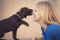 Research Reveals the Genetic Code for Dog Friendliness