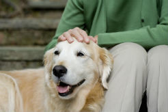 Strategies to Help Manage Cognitive Decline in Senior Dogs