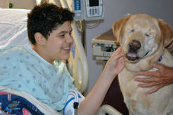 Harley the Therapy Dog Doesn't Need Sight to Make A Difference