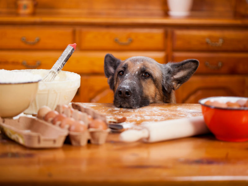 Your Dog Will Love These Homemade Vet-Approved Dog Treat