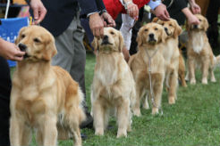 Bomb Sniffing Dog Breeds  Minutes
