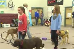 Colorado Elementary School Students Train Service Dog For Local Veteran in Need