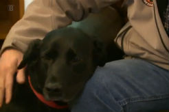 Black Lab Credited With Saving Next-Door Neighbor's Life - thumbnail