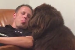 Man Sticks Out Tongue, His Dog's Heartfelt Response Is Too Cute - thumbnail
