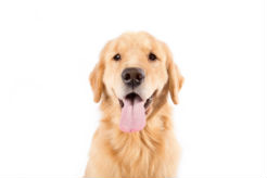 Congressional Veterinarians Introduce Resolution Honoring Purebred Dogs