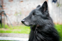 Nutrition and Supplements for the Senior Dog - thumbnail