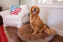 The Pet Lover's Guide to Buying a Home: 6 Things You Might …